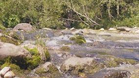 Córrego rochoso do rio no córrego da água da floresta da montanha que flui rapidamente perto acima video estoque