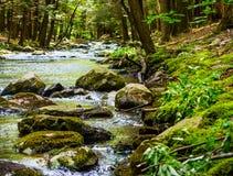 Córrego rochoso e bancos musgosos em uma floresta Imagem de Stock Royalty Free