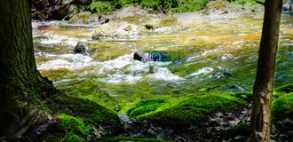 Córrego rochoso e bancos musgosos em uma floresta Fotografia de Stock Royalty Free