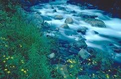 Córrego Running Fotos de Stock
