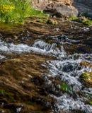 Córrego Running Foto de Stock Royalty Free