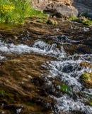 Córrego Running Fotografia de Stock