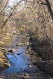 Córrego running sob árvores desencapadas Imagens de Stock Royalty Free