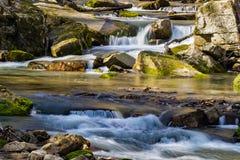 Córrego selvagem de conexão em cascata da truta da montanha imagem de stock royalty free