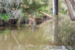 Córrego silencioso com reflexões Fotos de Stock Royalty Free