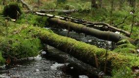 Córrego sombrio da floresta úmida no primeiro plano filme