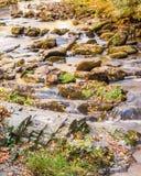 Córrego tranquilo com cor do outono Fotos de Stock