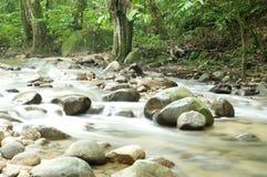 Córrego tropical da cachoeira foto de stock royalty free