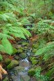 Córrego tropical da floresta. Imagem de Stock