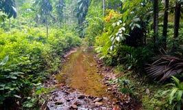 Córrego tropical da montanha Imagem de Stock Royalty Free