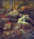 Córrego v da floresta Fotografia de Stock