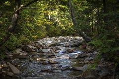 Córrego verde da água das montanhas imagem de stock royalty free