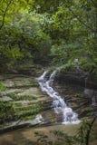 Córregos da floresta Imagem de Stock