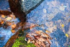 Córregos das folhas caídas Fotos de Stock Royalty Free
