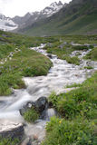 Córregos leitosos Fotografia de Stock Royalty Free