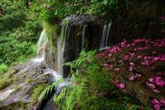 Córregos na floresta Fotos de Stock