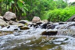 Córregos pequenos na floresta primitiva Imagem de Stock Royalty Free