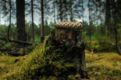 Cône d'isolement dans la forêt photographie stock