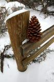 Cône de pin Photo libre de droits