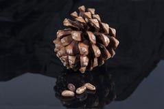 Cône de pin de Brown avec le noir brillant de tissu noir d'isolement Photographie stock