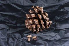 Cône de pin de Brown avec le tissu noir Image stock
