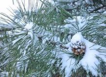 Cône de pin couvert dans la neige Photographie stock