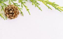 Cône de pin d'or et branche d'arbre de sapin sur le backgro blanc de neige de scintillement Photos libres de droits