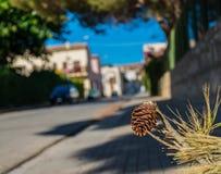 Cône de pin tombé au sol photographie stock libre de droits