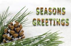 Cône et branche de sapin de salutations de saisons avec la neige Images libres de droits