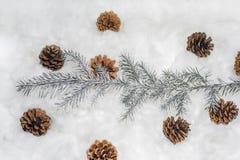 Cônes dans la neige Macro photo de petits cônes décoratifs Photo libre de droits