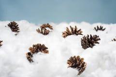 Cônes dans la neige Macro photo des cônes décoratifs Images stock