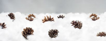 Cônes dans la neige Macro photo des cônes décoratifs Images libres de droits