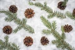 Cônes dans la neige Macro photo des cônes décoratifs Photo libre de droits