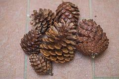 Cônes de pin dans le secteur d'Alimini Images libres de droits