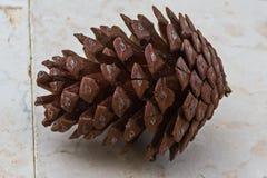 Cônes de pin dans le secteur d'Alimini Photos stock