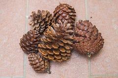 Cônes de pin dans le secteur d'Alimini Photo libre de droits