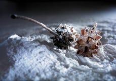 Cônes de pin sur la neige blanche Photographie stock
