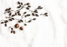 Cônes et écrous secs sur le fond blanc, vue supérieure Composition naturelle avec l'espace libre pour le texte Photographie stock