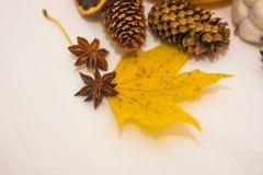 Cônes et feuille d'érable jaune Image libre de droits