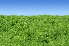 Côté d'herbe verte. images stock