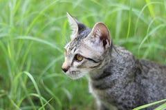 Côté de chat dans l'herbe Image libre de droits