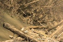 Côté de fleuve après inondation image stock