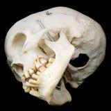 Côté en dessous de crâne humain Photo libre de droits