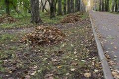 Côté rustique rural de tristesse de route de feuilles d'automne, photographie stock