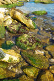 Côte avec des pierres avec les algues marines. Image libre de droits
