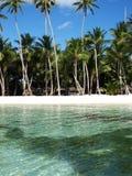 Côte chaude avec des palmiers photographie stock