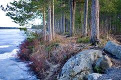 Côte d'un lac en Suède Images stock