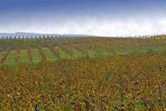 Côte de centrale de vin image libre de droits