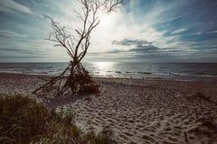 Côte de mer baltique avec un arbre inextricable photographie stock libre de droits