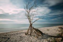 Côte de mer baltique avec un arbre inextricable - longue exposition photographie stock